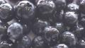 Blueberry, fruit tree, fruit, white background, fruit, harvest, agriculture 55986441