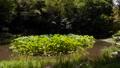 万葉の森 ハス池 56044477