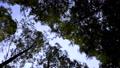 万葉の森 56044479