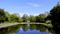 万葉の森 ホテイアオイの池 56044481