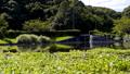 万葉の森 ホテイアオイの池 56044715