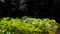 万葉の森 ハス池 56052087