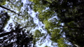 万葉の森 56052090