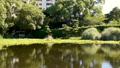 万葉の森 ホテイアオイの池 56052094