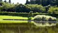 万葉の森 ホテイアオイの池 56052095
