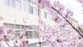 樱花和学校(空中射击修复射击) 56057954