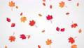 Falling Autumn Leaves animation. 56218616
