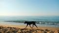 Homeless dog is running along the seaside 56580242