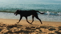 Homeless dog is running along the seaside, close-up 56580243