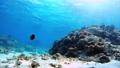 沖繩Akajima的Nishihama海灘水下攝影 56609756