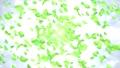 爆発と葉っぱ/白背景 56616789