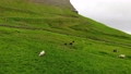 Sheep in grass grazing field with beautiful landscape. Cloudy sky and strong wind. Faroe Islands. 56680632