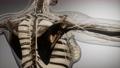 Transparent Human Body with Visible Bones 56682235