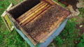 the beekeeper works in the apiary with bee families. Village apiary. 56745401