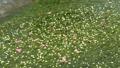 สาหร่ายดอกไม้เหม่ย 56782053