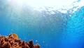 沖繩Akajima的Nishihama海灘水下攝影 56786019