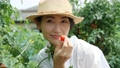 女性收获蕃茄领域 56792648