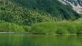 新緑の大正池 長野県上高地 56810216
