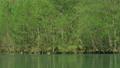 新緑の大正池 長野県上高地 56810218