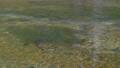 上高地 田代池の川の流れ 56810495