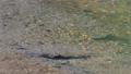 上高地 田代池の川の流れ 56810497