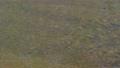 上高地 田代池の川の流れ 56810499