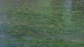 上高地 田代池の川の流れ 56810501