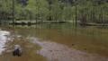 上高地 新緑の田代池 川の流れ 56810527