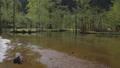 上高地 新緑の田代池 川の流れ 56810528