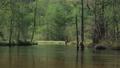上高地 新緑の田代池 川の流れ 56810529