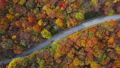 Aerial of cars driving through sunny autumn forest. 56824588