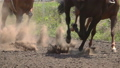 The Feet of the Horses at the Racetrack 56851433