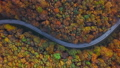 Aerial of cars driving through sunny autumn forest. 56858078