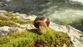 Snail slowly creeping macro close-up 56880098