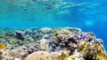 Underwater Coral Reef with Colorful Tropical Fish in Red Sea. Egypt. 56915205