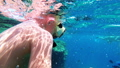 Young Boy with Mask and Tube First Time Snorkeling in Red Sea near Coral Reef 56915247