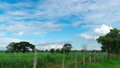 Time-lapse of grass field and beautiful bright blue sky with white fluffy clouds motion 56922135