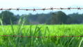 grass field behind the lines of rusty barbed wire 56922136