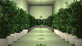 Cannabis Plants in Cultivation Room Animation 1 57033395