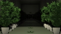Cannabis Plants in Cultivation Room 3D Animation 2 57033396