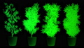 Cannabis Plants in Abstract Lights 3D Animation 57033398