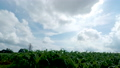 time lapse of clouds are moving across over corn plants and sun moving down 57139618