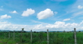 big green grass field rounding by barbed wire fence with blue sky and fluffy clouds motion 57139619