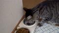 水を飲む猫 57171020