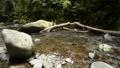 倒木と落石と奥十曽渓谷の渓流 57175117