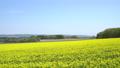 一邊強姦花朵(北海道安平平拍攝) 57182376