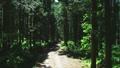 숲 57254059