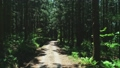숲 57254060