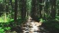 숲 57254137