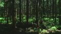 숲 57254138